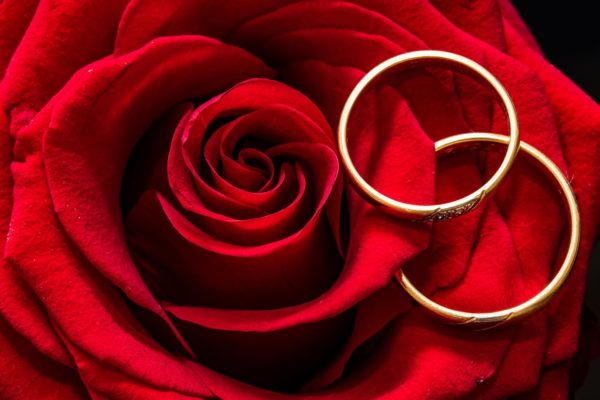 Close-up photo of two white gold wedding rings designs placed atop a full-bloomed red rose